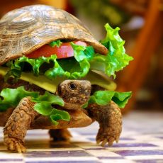 Cheese-Turtle-Burger