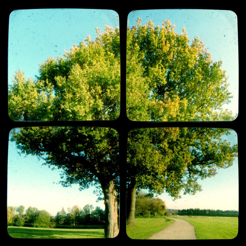 Picture of a tree, separated into four frames